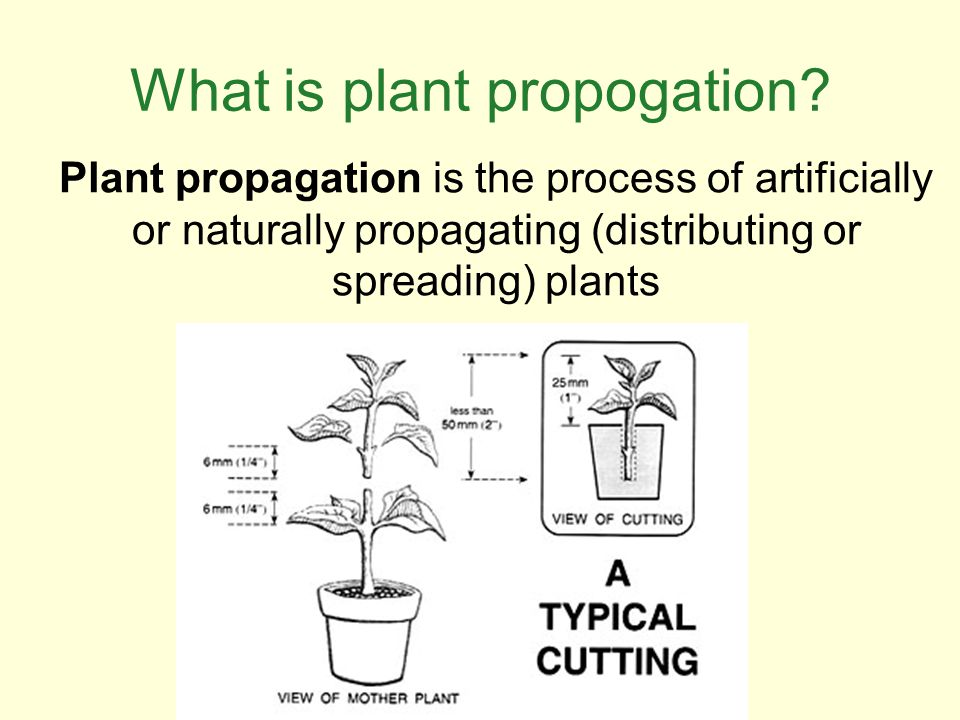 What is plant propogation
