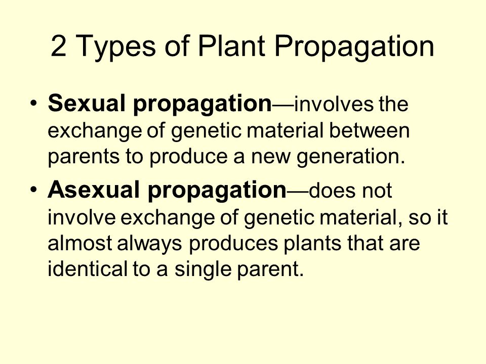 2 Types of Plant Propagation