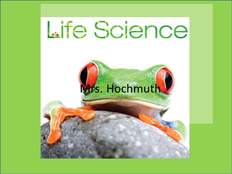 Mrs. Hochmuth