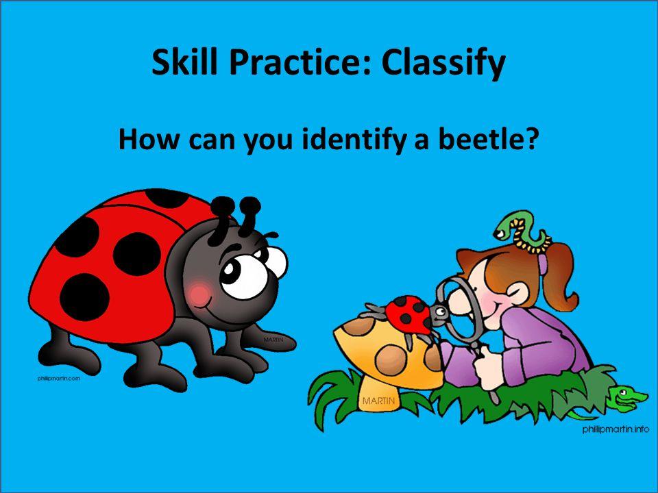 Skill Practice: Classify