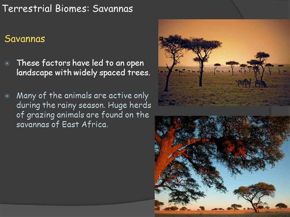 Terrestrial Biomes: Savannas
