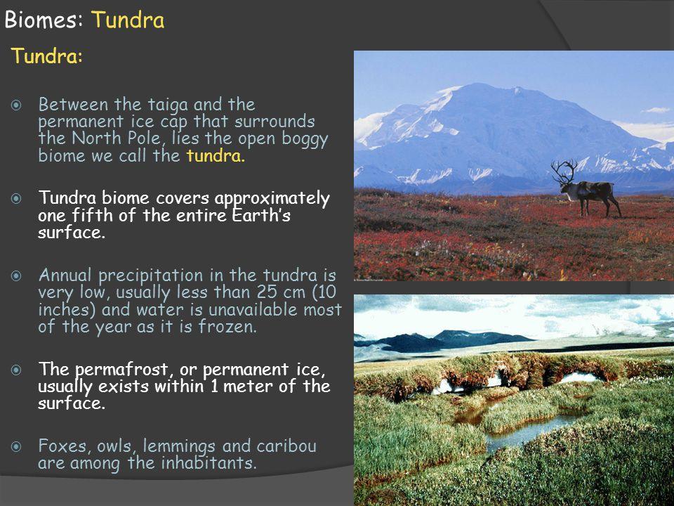 Biomes: Tundra Tundra: