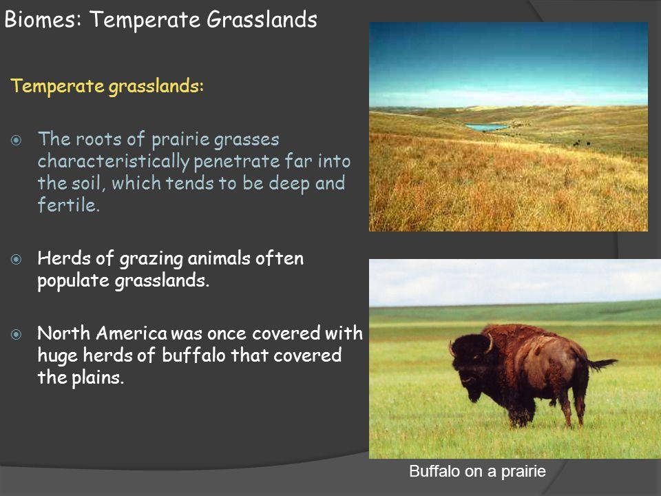 Biomes: Temperate Grasslands