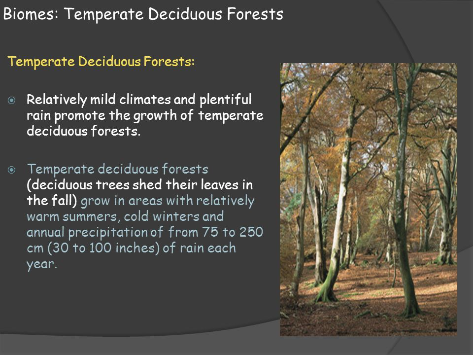 Biomes: Temperate Deciduous Forests