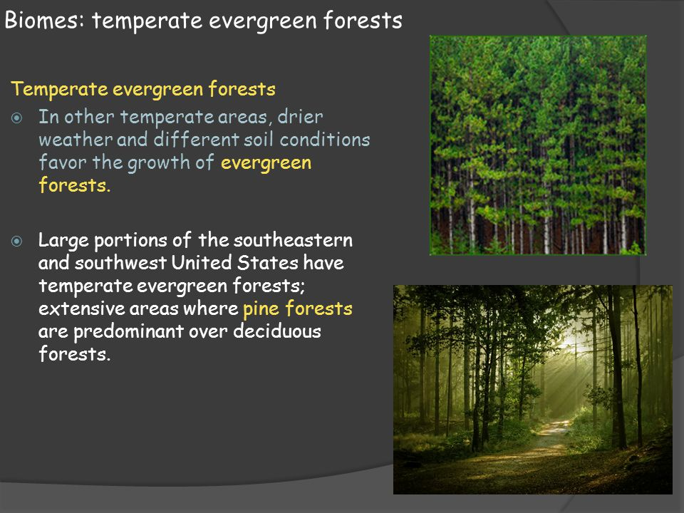 Biomes: temperate evergreen forests