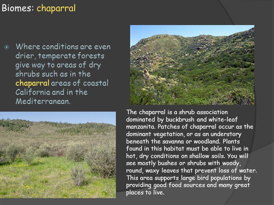 Biomes: chaparral