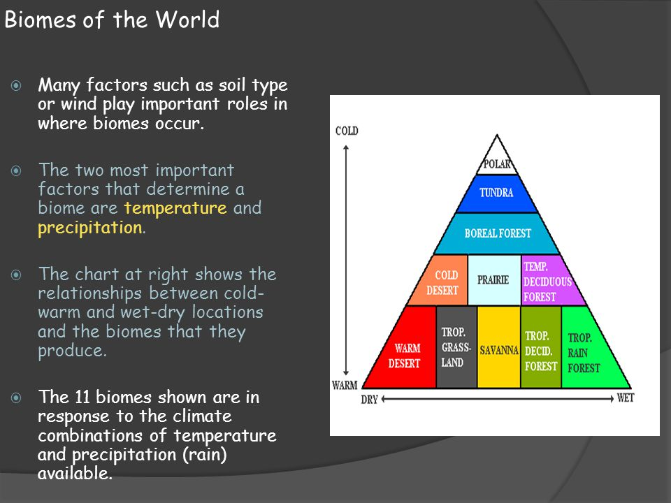 Biomes of the World Many factors such as soil type or wind play important roles in where biomes occur.