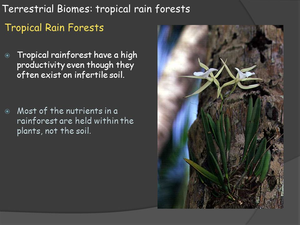 Terrestrial Biomes: tropical rain forests