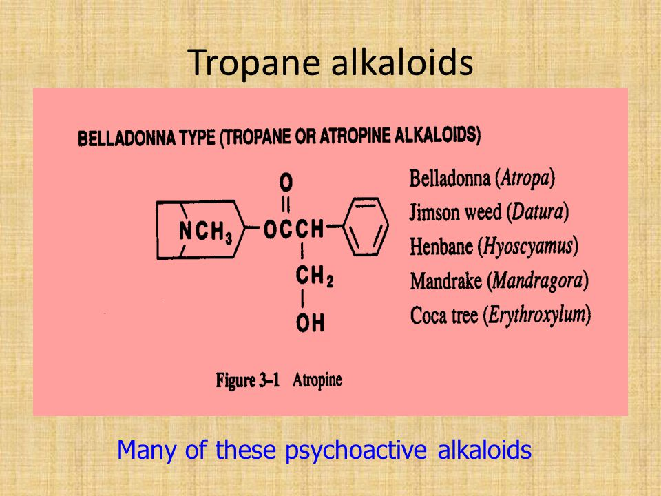 Tropane alkaloids Many of these psychoactive alkaloids