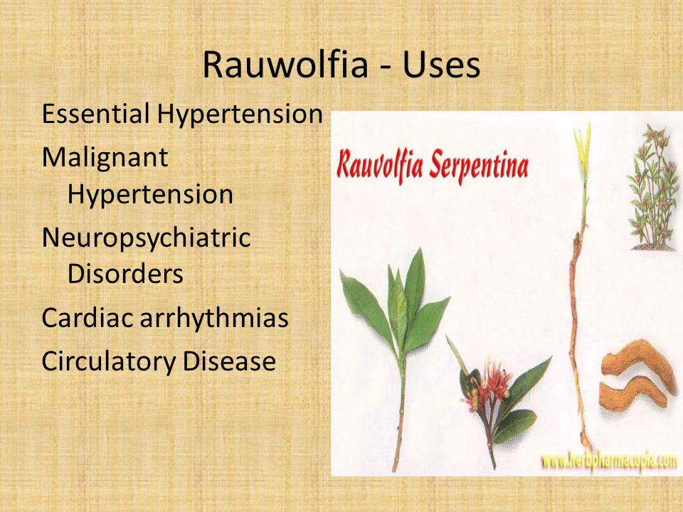 Rauwolfia - Uses Essential Hypertension Malignant Hypertension