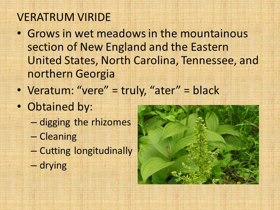 Veratum: vere = truly, ater = black Obtained by: