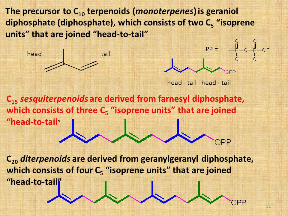 The precursor to C10 terpenoids (monoterpenes) is geraniol