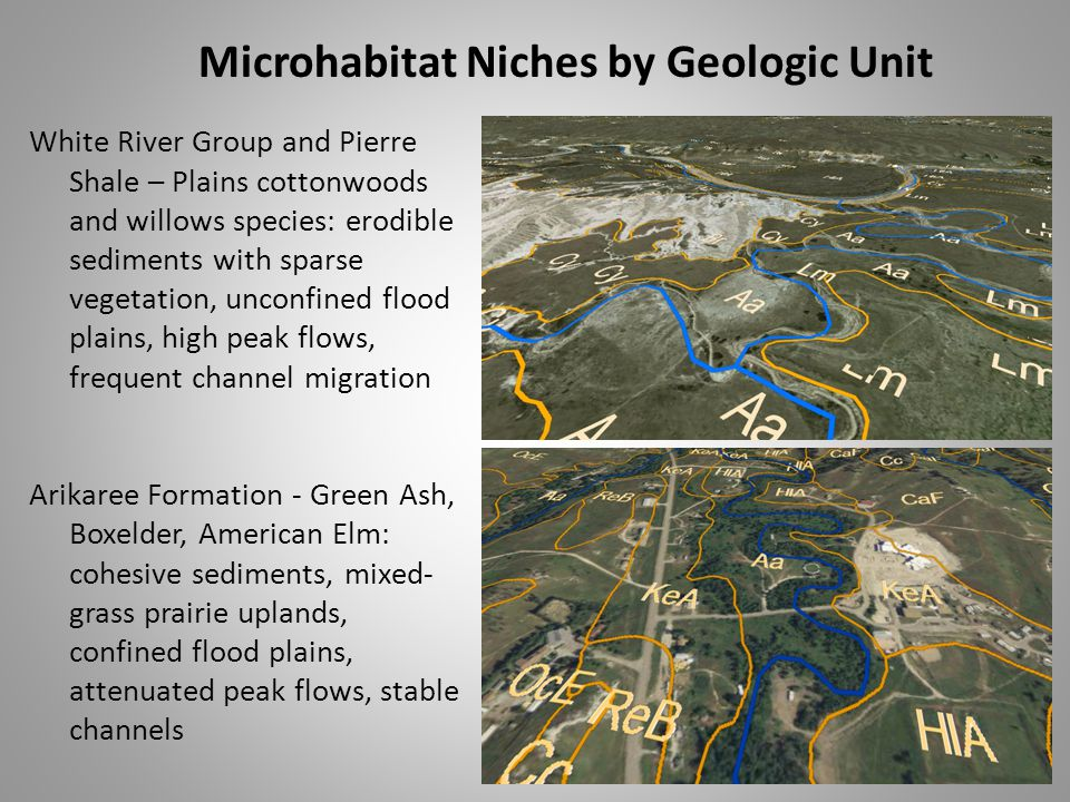 Microhabitat Niches by Geologic Unit