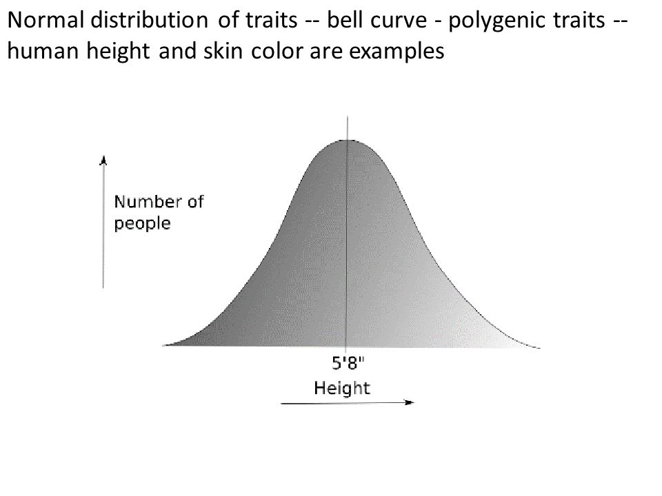 Normal distribution of traits -- bell curve - polygenic traits -- human height and skin color are examples