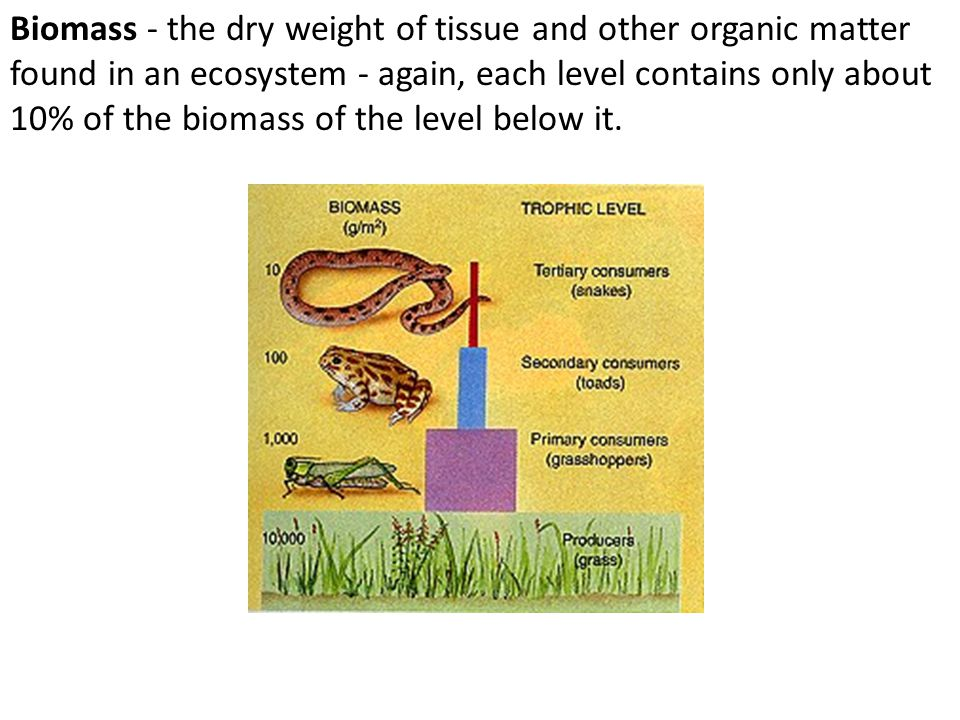 Biomass - the dry weight of tissue and other organic matter found in an ecosystem - again, each level contains only about 10% of the biomass of the level below it.