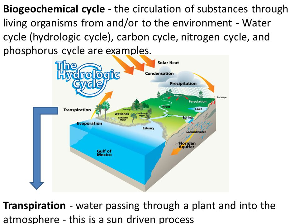 Biogeochemical cycle - the circulation of substances through living organisms from and/or to the environment - Water cycle (hydrologic cycle), carbon cycle, nitrogen cycle, and phosphorus cycle are examples.