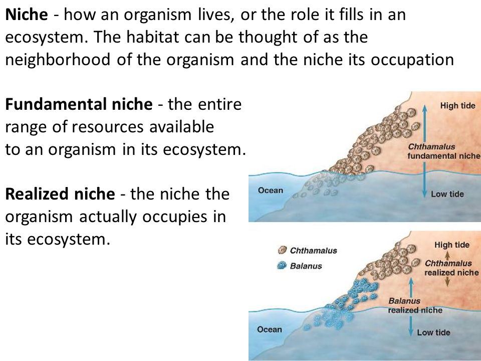 Niche - how an organism lives, or the role it fills in an ecosystem