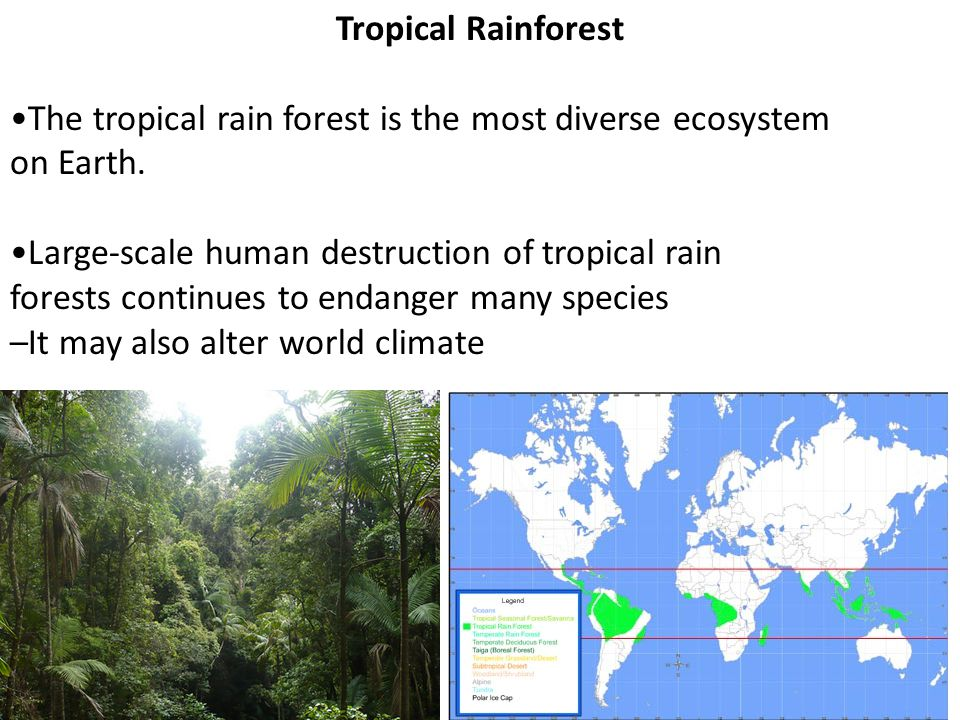 Tropical Rainforest •The tropical rain forest is the most diverse ecosystem. on Earth. •Large-scale human destruction of tropical rain.