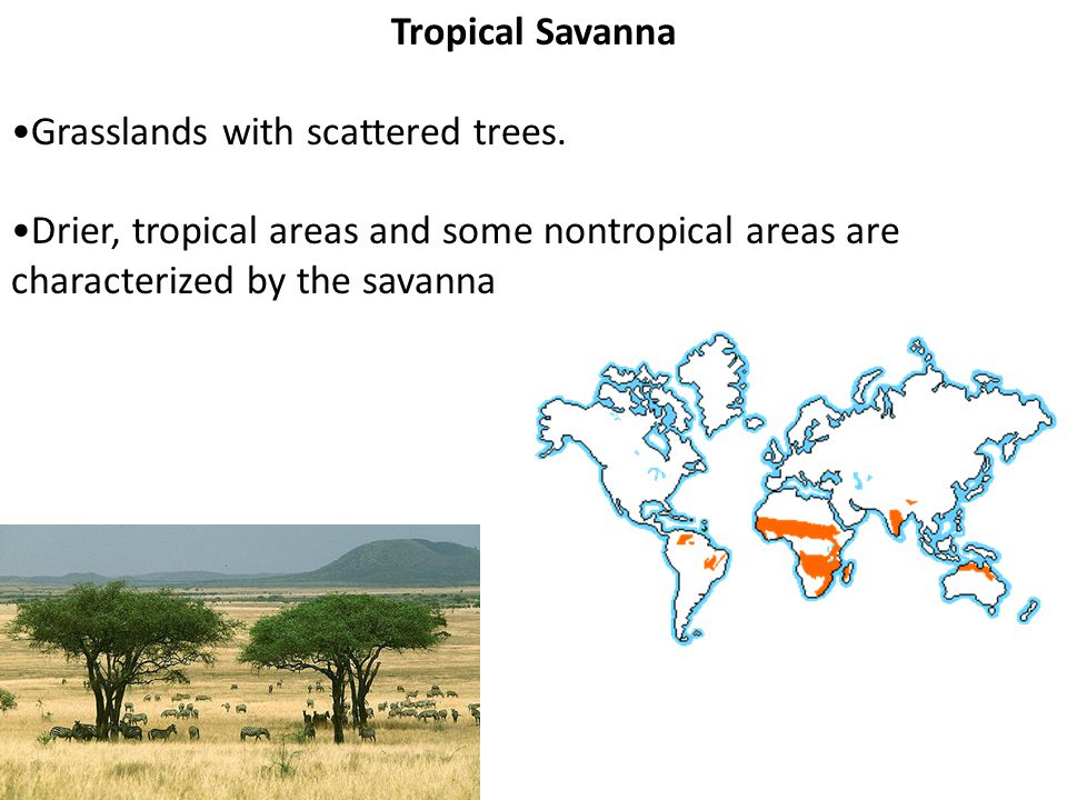 Tropical Savanna •Grasslands with scattered trees.