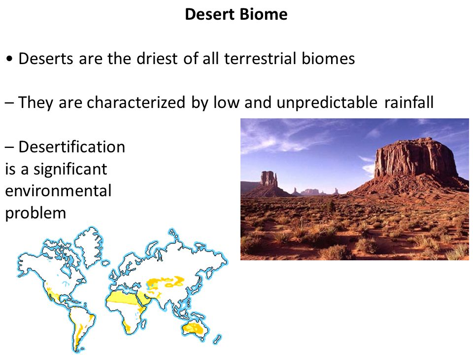 Desert Biome • Deserts are the driest of all terrestrial biomes. – They are characterized by low and unpredictable rainfall.