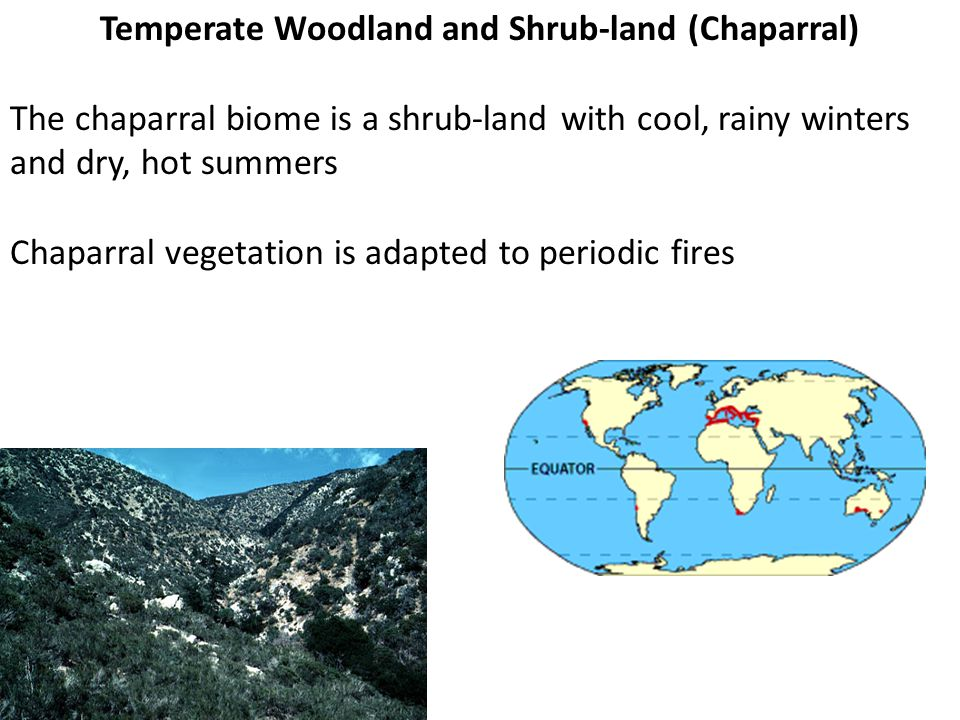 Temperate Woodland and Shrub-land (Chaparral)