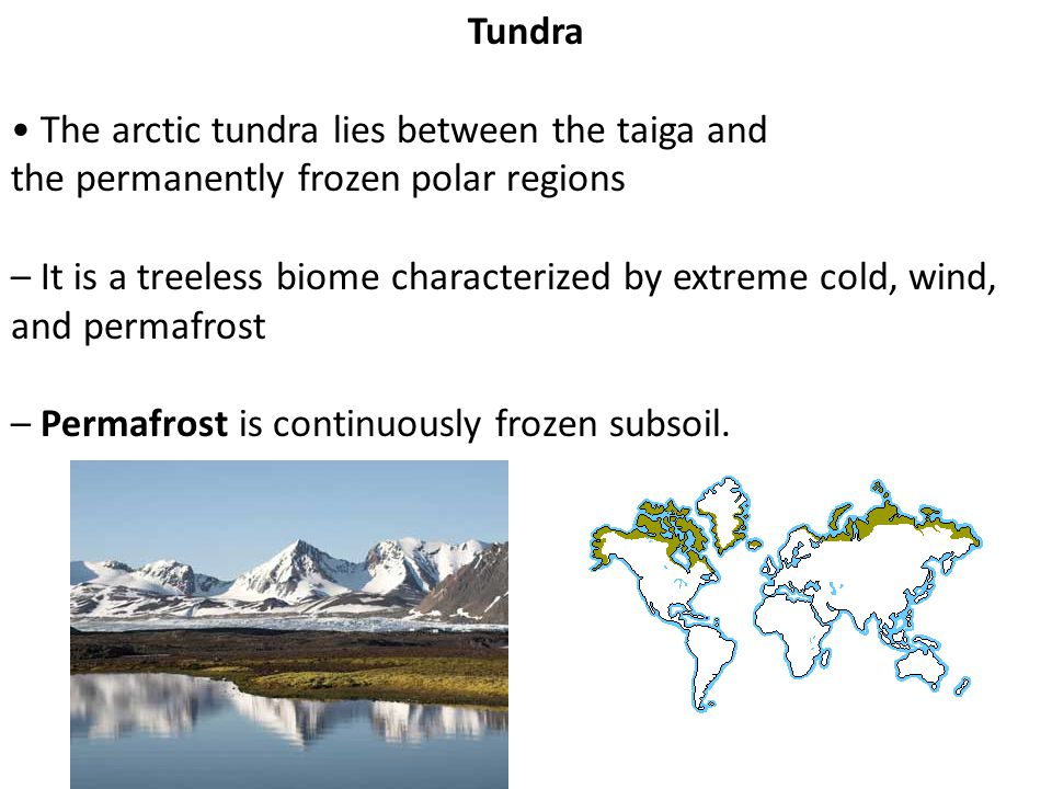 Tundra • The arctic tundra lies between the taiga and. the permanently frozen polar regions.