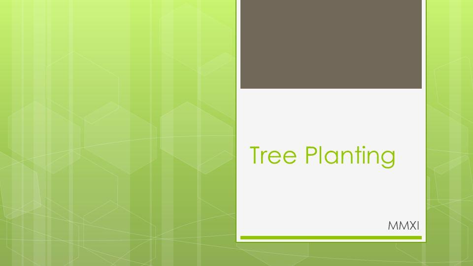 Tree Planting MMXI