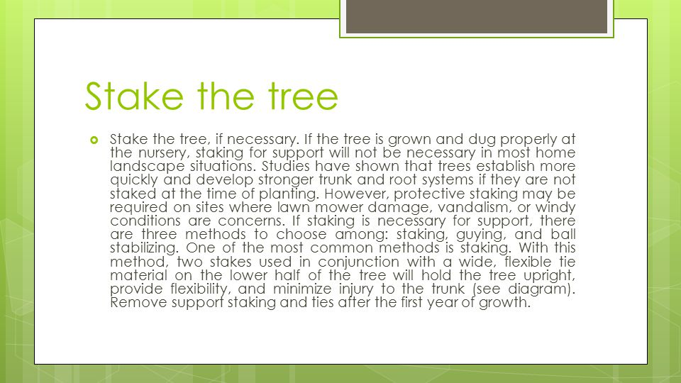 Stake the tree