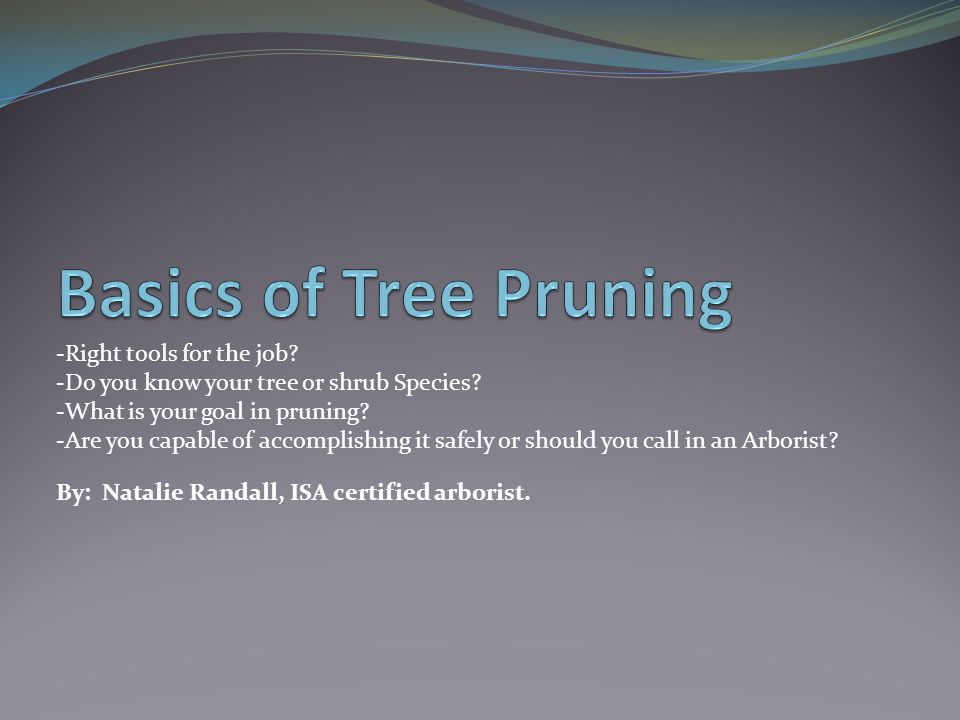 Basics of Tree Pruning -Right tools for the job