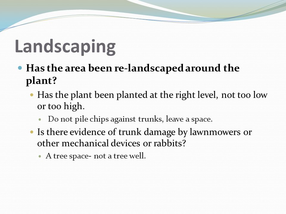 Landscaping Has the area been re-landscaped around the plant