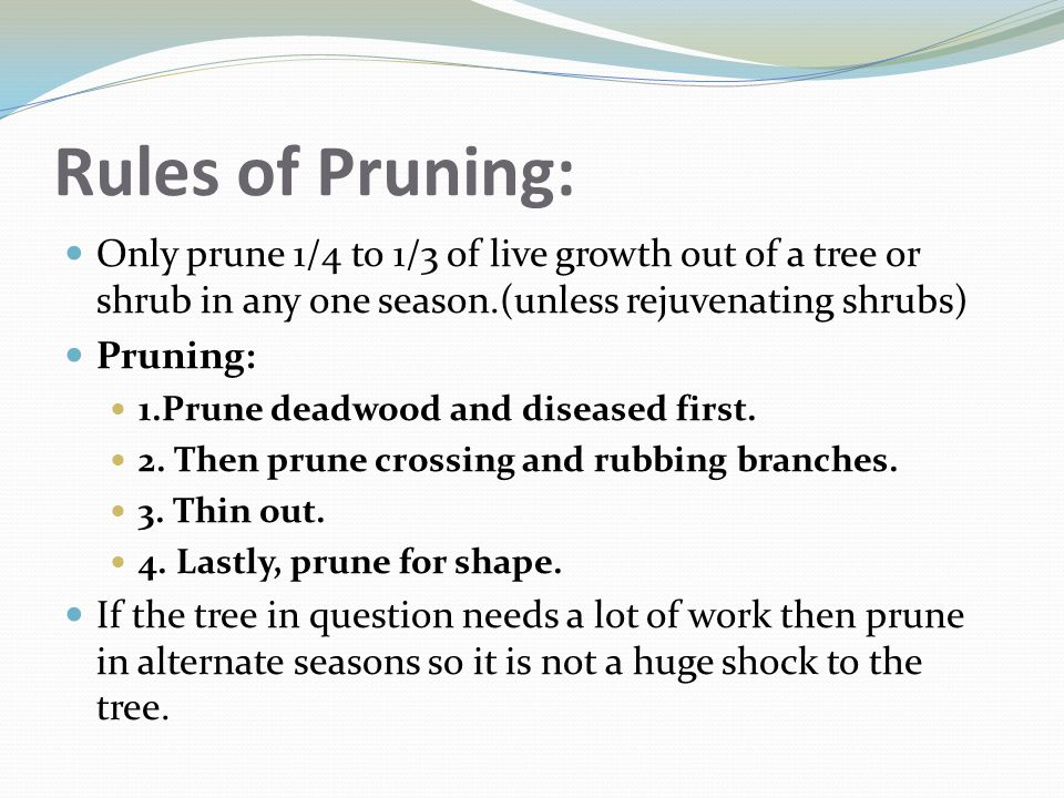 Rules of Pruning: Only prune 1/4 to 1/3 of live growth out of a tree or shrub in any one season.(unless rejuvenating shrubs)