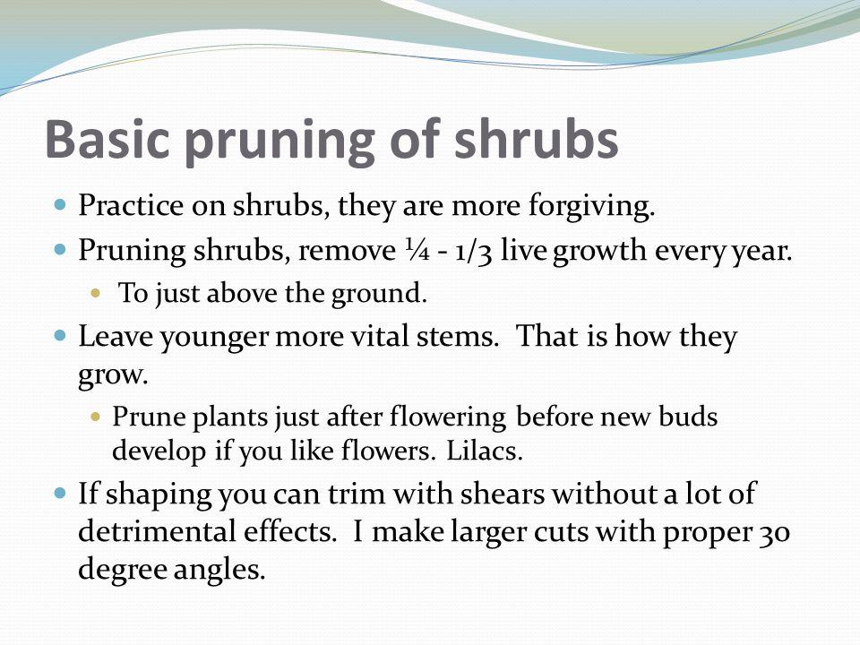 Basic pruning of shrubs