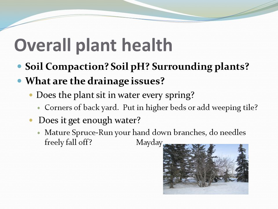 Overall plant health Soil Compaction Soil pH Surrounding plants