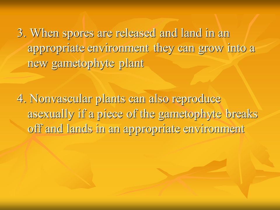 3. When spores are released and land in an appropriate environment they can grow into a new gametophyte plant