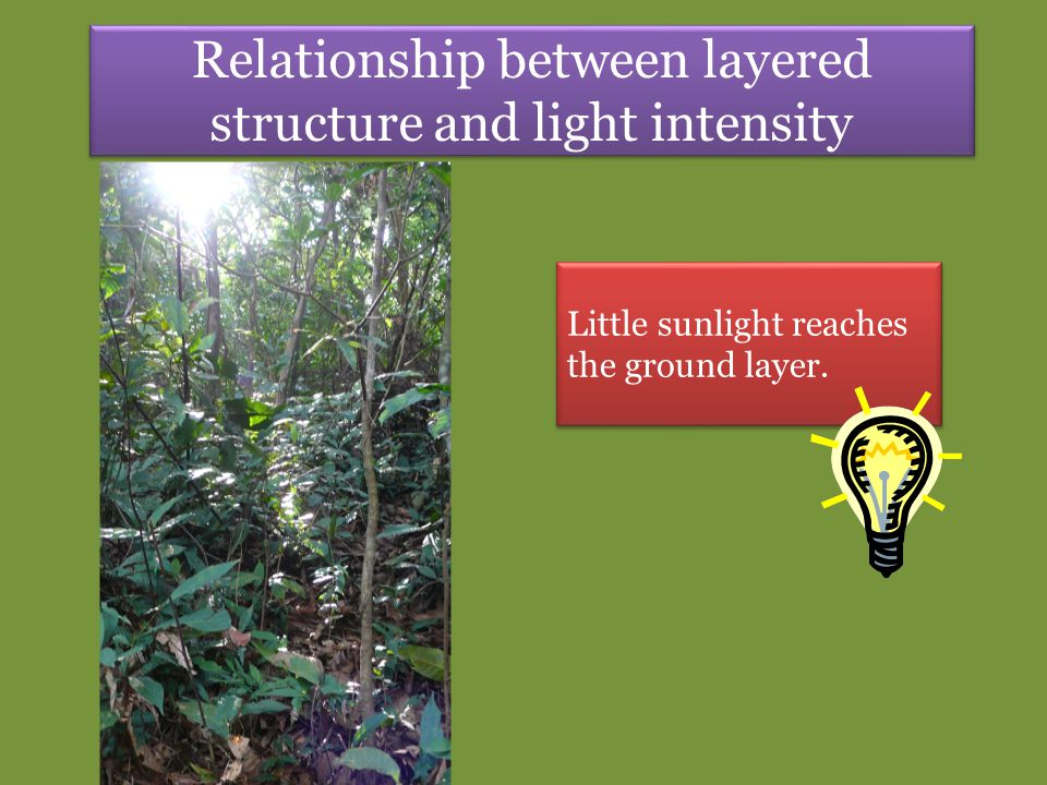 Relationship between layered structure and light intensity