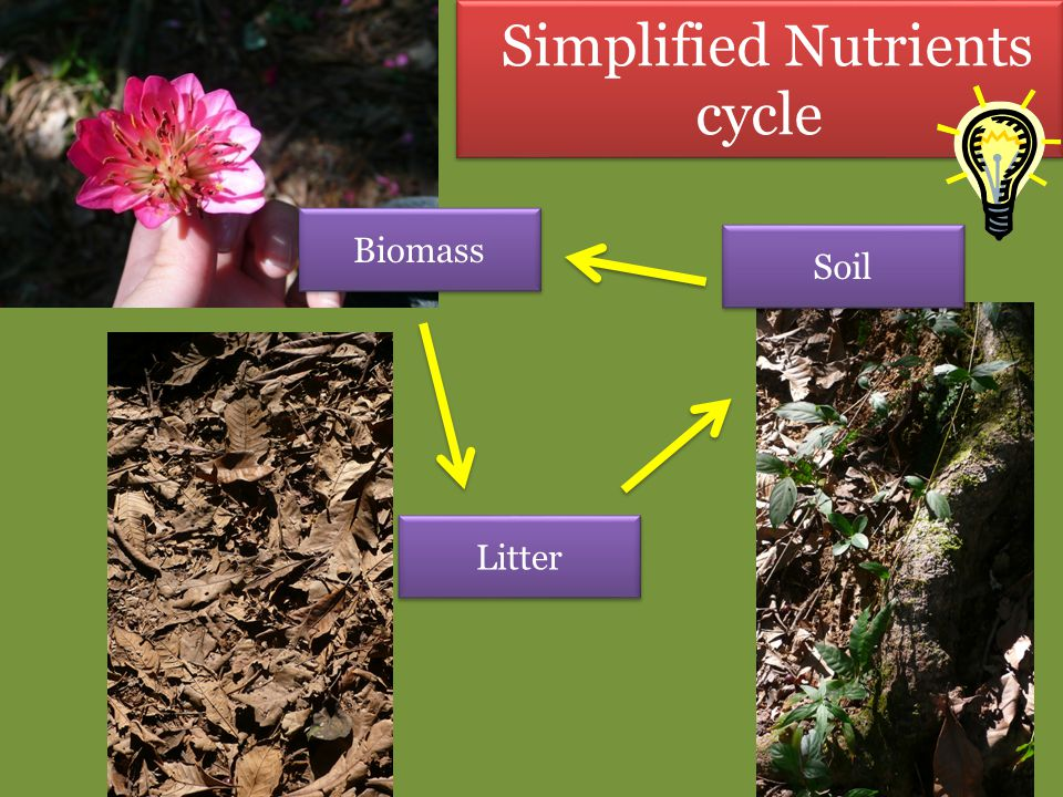 Simplified Nutrients cycle