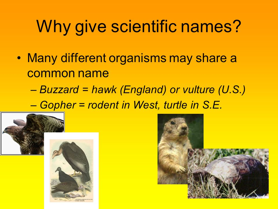 Why give scientific names