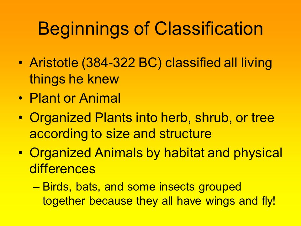 Beginnings of Classification