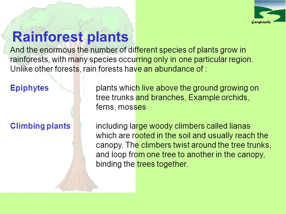Rainforest plants And the enormous the number of different species of plants grow in.