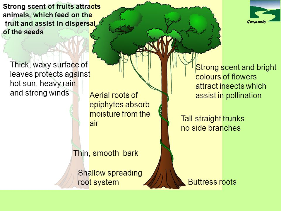 leaves protects against hot sun, heavy rain, and strong winds