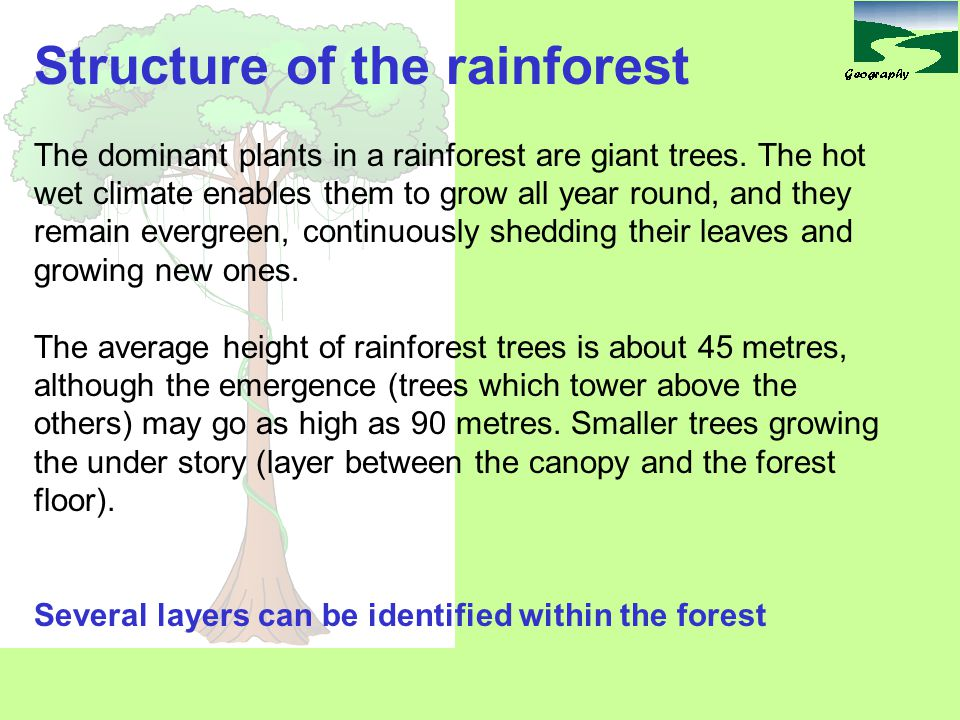 Structure of the rainforest