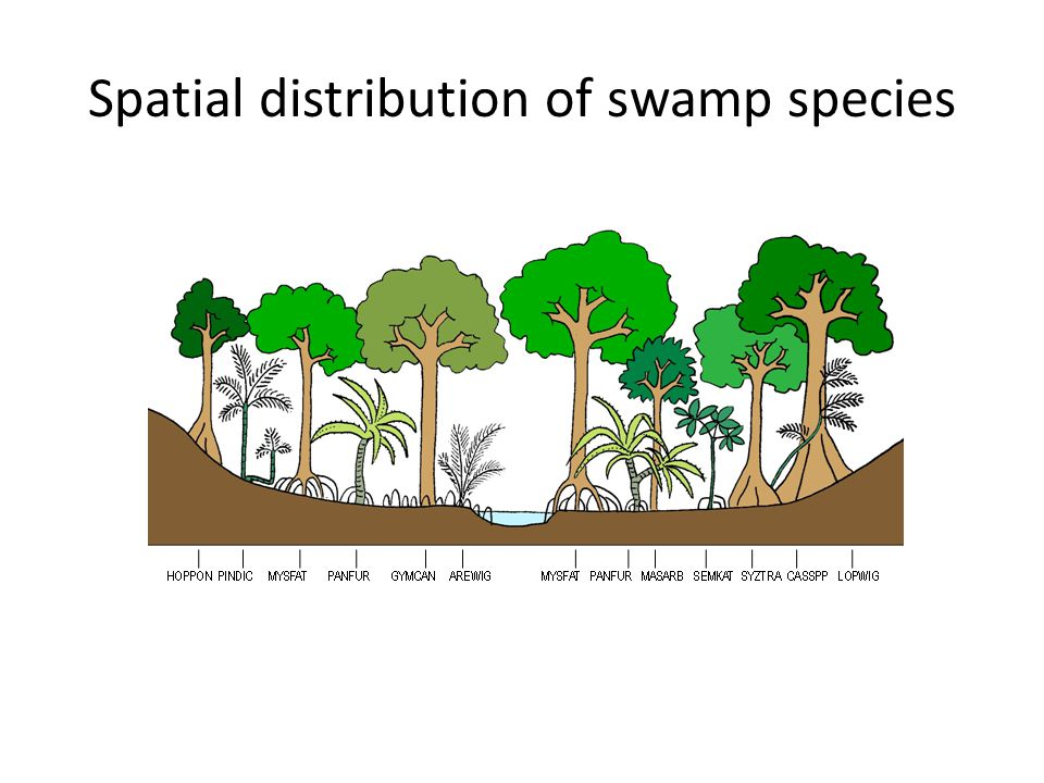 Spatial distribution of swamp species