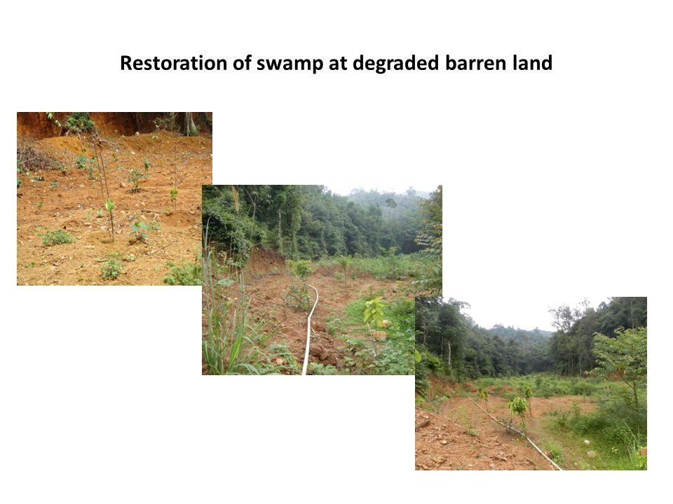 Restoration of swamp at degraded barren land