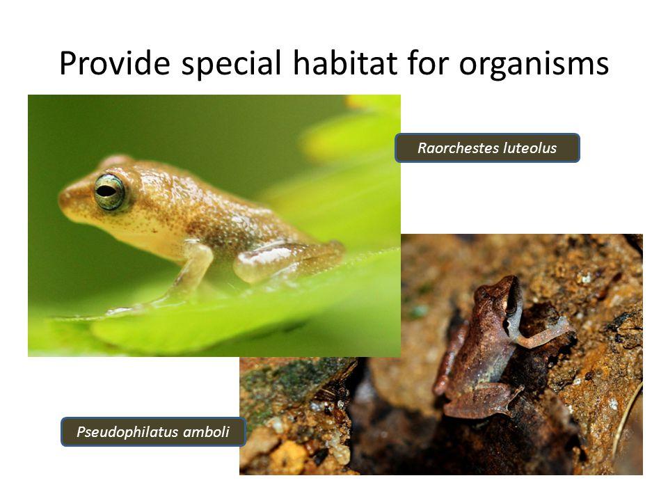 Provide special habitat for organisms