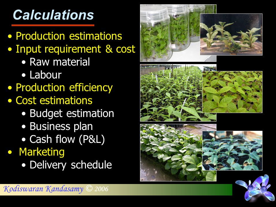 Calculations Production estimations Input requirement & cost