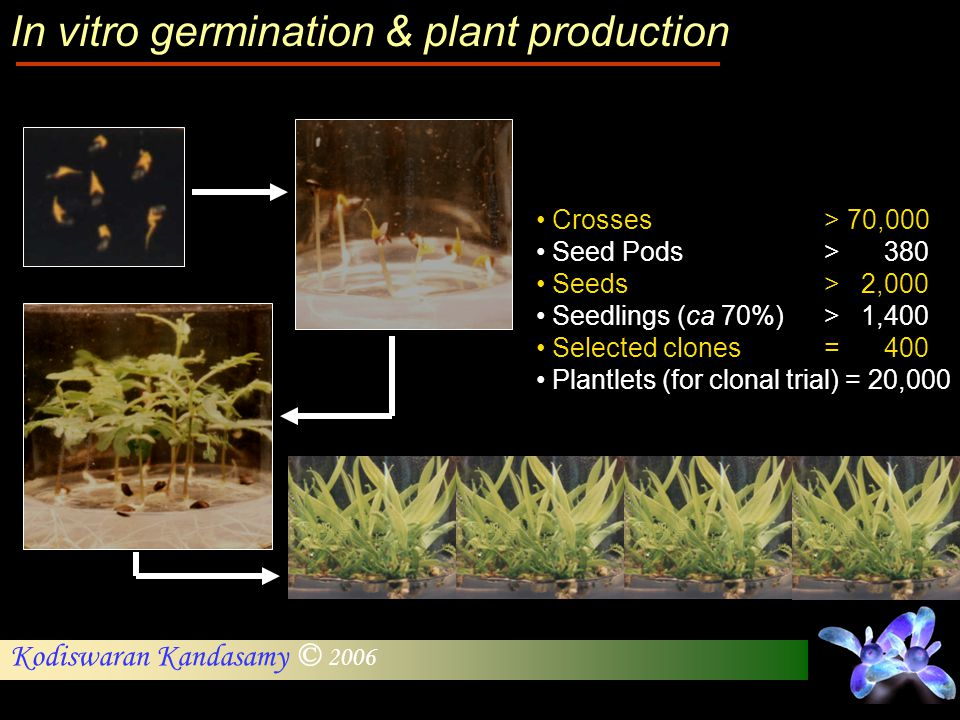 In vitro germination & plant production