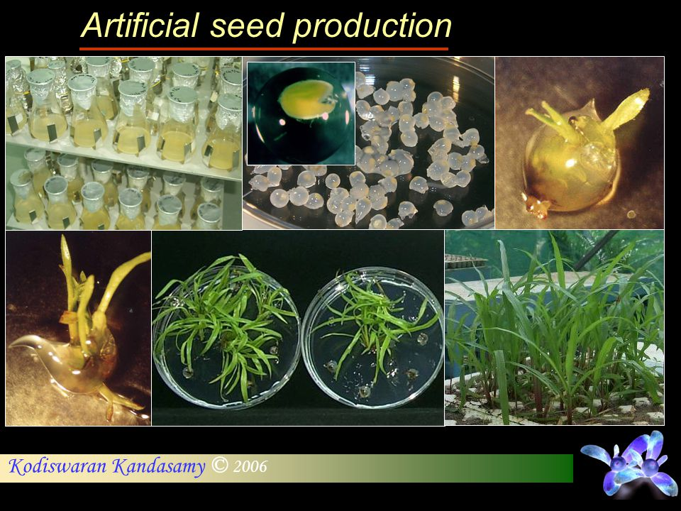 Artificial seed production
