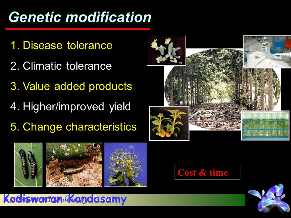 Genetic modification 1. Disease tolerance 2. Climatic tolerance