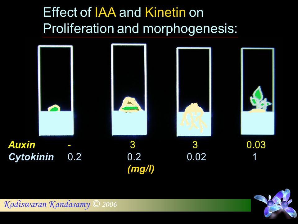 Effect of IAA and Kinetin on Proliferation and morphogenesis: