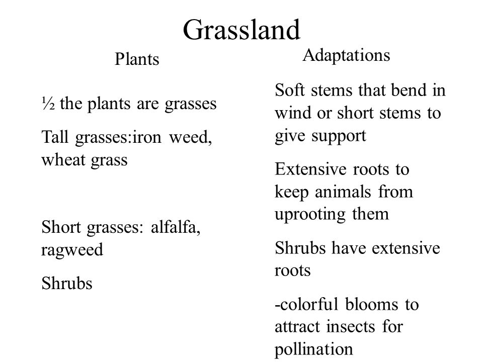 Grassland Adaptations Plants